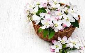 Картинка цветы, стол, корзина, яблони, Olena Rudo