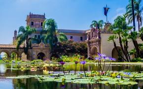 Картинка небо, солнце, цветы, пруд, парк, пальмы, здание, Калифорния, США, Сан-Диего, Balboa Park
