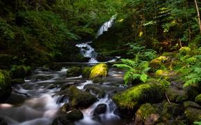 Картинка зелень, лес, лето, свет, ветки, природа, камни, берег, водопад, папоротник, замшелые