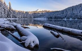 Картинка лес, небо, свет, снег, горы, озеро, отражение, берег, вершины, ели, Канада, бревно, водоем, водная гладь, …