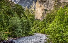 Картинка зелень, лес, деревья, горы, камни, скалы, Швейцария, речка