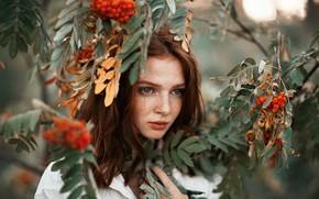 Картинка взгляд, листья, девушка, ветки, лицо, ягоды, портрет, веснушки, рыжая, рябина, конопатая, Олег Коваленко