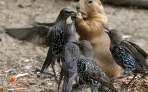 Картинка птицы, зверёк, воришки