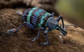 Картинка фиолетовый, макро, фон, жук, насекомое, кора, полосатый, долгоносик