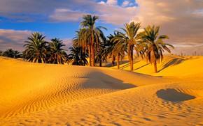 Картинка песок, пальмы, пустыня, дюны