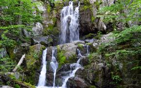 Картинка скала, ручей, водопад, мох, США, Shenandoah National Park