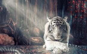 Картинка белый, тигр, отдых