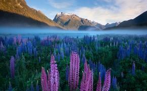 Картинка цветы, рассвет, Новая Зеландия