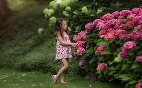 Картинка лето, цветы, природа, девочка, кусты, ребёнок, гортензия, Анастасия Бармина, Бармина Анастасия