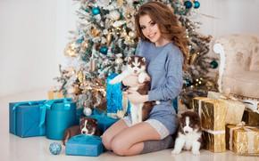 Картинка собаки, поза, улыбка, настроение, модель, щенки, подарки, Новый год, ёлка, хаски, Наталья Найденко, Юлия Можайская ...