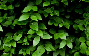 Картинка Природа, Листья, Зеленый, Растения, Флора, Листки, by Skitterphoto, Green Leafy Plant