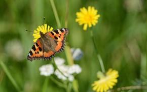 Картинка поле, лето, бабочка
