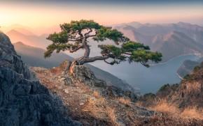 Картинка небо, трава, горы, туман, озеро, камни, дерево, скалы, рассвет, холмы, берег, склоны, вид, высота, даль, …