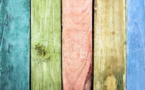 Картинка цвета, дерево, краска
