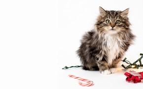 Картинка кошка, взгляд, котенок, Рождество, белый фон, Новый год, посох, гирлянда, мордашка, бантик
