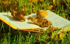 Картинка осень, трава, листья, свет, поляна, листва, желтые, сухие, книга, страницы, боке, осенние листья, раскрытая книга