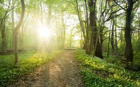 Картинка дорога, лес, свет, цветы, весна