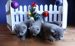 Картинка шарики, украшения, кошки, котенок, фон, праздник, игрушки, забор, новый год, рождество, котёнок, малыши, ёлочка, серые, …