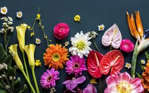 Обои цветы, фон, colorful, flowers, bright, various