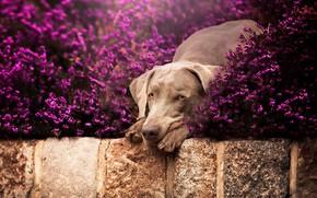 Картинка природа, друг, собака