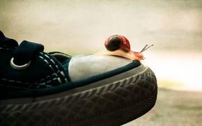 Картинка макро, фон, спорт, обувь, кеды, улитка, спортивная, путешествие, мысок