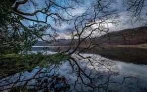 Картинка пейзаж, горы, природа, река, дерево, красота, панорама