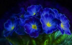 Картинка листья, цветы, лепестки, синие, примула, примулы