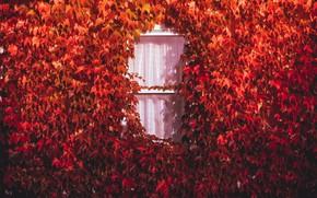 Картинка осень, дом, окно