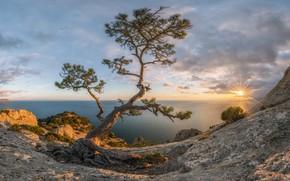 Картинка море, осень, солнце, лучи, пейзаж, закат, природа, Крым, сосна, Новый Свет