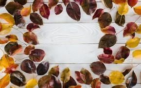 Картинка осень, листья, фон, дерево, доски, colorful, wood, background, autumn, leaves, осенние