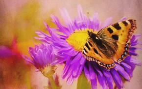 Картинка цветок, бабочка, обработка, арт, живопись, фотоарт