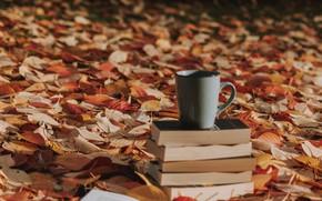 Картинка осень, листья, книги, кружка, опавшие листья
