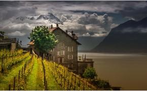 Картинка горы, озеро, дом, Швейцария, виноградник