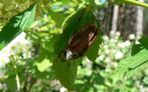 Картинка макро, Природа, жук, моё фото