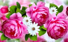 Картинка grafika, kwiaty, róże