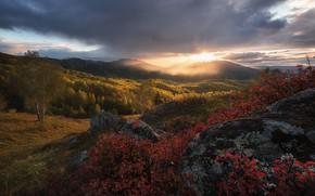 Обои осень, лес, небо, солнце, облака, лучи, горы, камни, холмы, листва, живописно