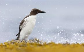 Картинка природа, дождь, птица