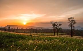 Картинка поле, лето, небо, деревья, закат, вечер, колоски, простор