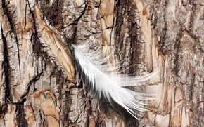 Картинка nature, feather, Log