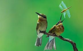 Картинка птицы, природа, ветка, стрекоза, пара