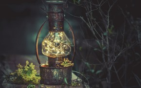 Картинка цветы, фон, лампа