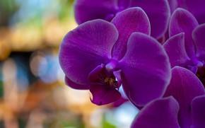 Картинка макро, цветы, фон, яркие, фиолетовые, орхидеи, сиреневые, боке