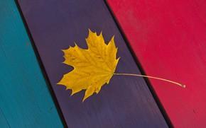 Картинка осень, лист, краски, полоса, доски, клён