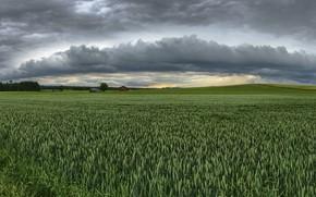 Картинка поле, лето, небо, колосья