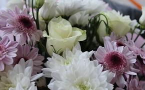 Картинка макро, Цветы, букет