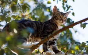 Картинка кошка, кот, котенок, дерево, листва, ветка, котёнок, боке