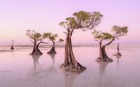 Картинка Island, Walakiri Beach, Sumba, Dancing Trees