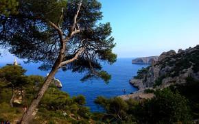 Картинка море, деревья, пейзаж, природа, скалы, побережье, Франция