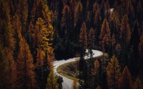 Картинка Природа, Дорога, Осень, Деревья, Лес, Путь, Пейзаж, Nature, Landscape, Autumn, Road, Forest, Trees, Scenic, Woods, ...