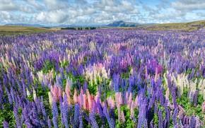 Картинка поле, лето, небо, облака, пейзаж, цветы, холмы, красота, даль, луг, голубые, розовые, цветение, синие, цветочное …
